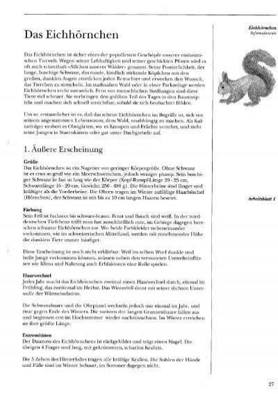 Das Eichhörnchen Arbeitsblatt : Das eichhörnchen jungjaeger bern
