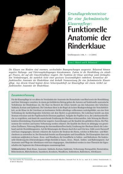 Funktionelle Anatomie der Rinderklaue - Vetion.de
