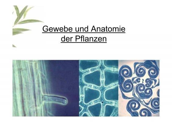 Gewebe und Anatomie der Pflanze