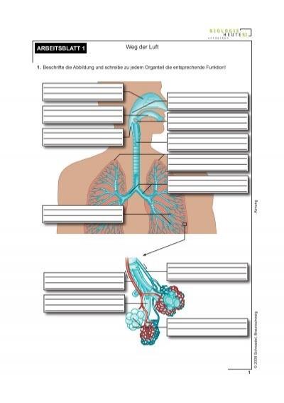 weg der luft arbeitsblatt badmintonshop krasselt. Black Bedroom Furniture Sets. Home Design Ideas