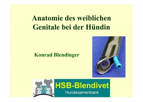 Anatomie des weiblichen Genitale bei der Hündin - AGRH