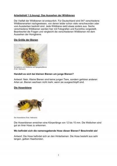 Tolle Chemie Der Gen Arbeitsblatt Antworten Zeitgenössisch ...