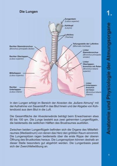 1. Anatomie und Physiolog