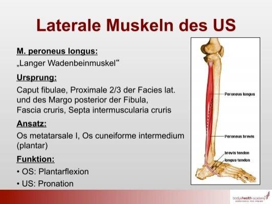 Muskeln der Hüfte M. ten