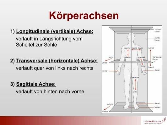 Beste Anatomie Körperebenen Galerie - Anatomie Von Menschlichen ...