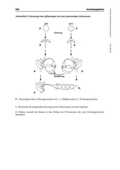 Biologie heute © 1998 Sc