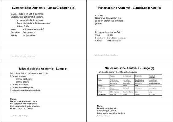 Systematische Anatomie -