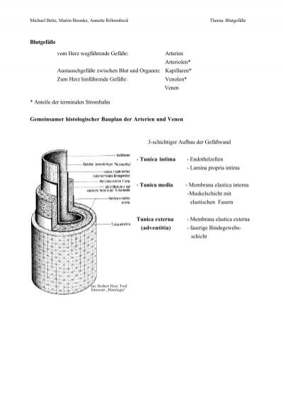 Gefässdiagnostik mit Ultraschall : Doppler- und ...