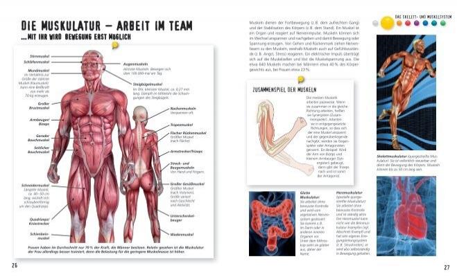 Die Muskulatur – Arbeit