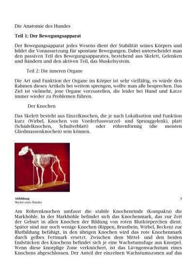 Die Anatomie des Hundes Teil 1: Der Bewegungsapparat Der ...