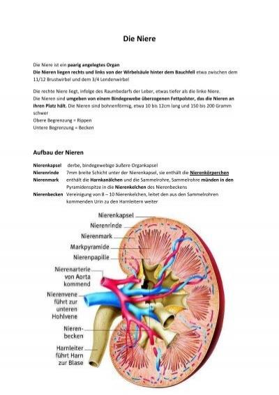 Die Niere