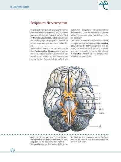 Peripheres Nervensystem - Schattauer