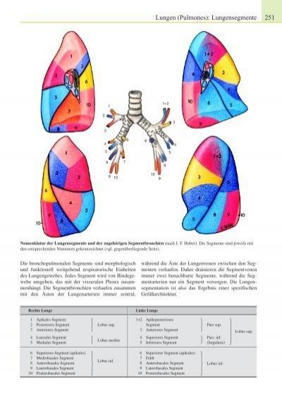 Lungen (