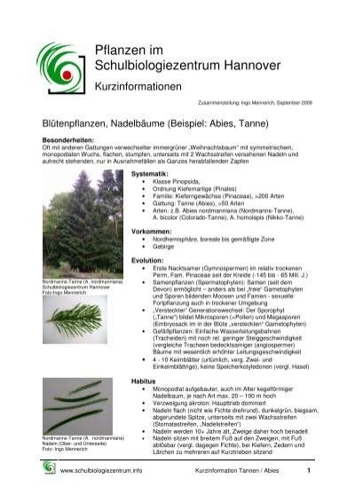 kurzinformation pflanzen im schulbiologiezentrum tanne - Einkeimblattrige Pflanzen Beispiele