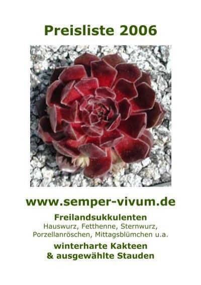 Staude /'PELORA/' Hauswurz winterharte Pflanze Sempervivum cv