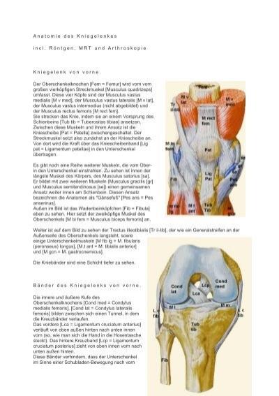 PDF: Anatomie des Kniegelenkes