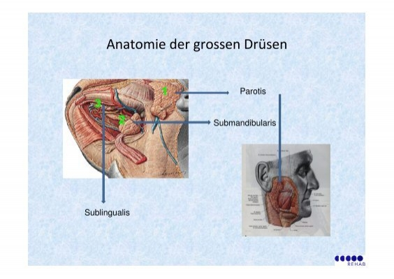 Anatomie der grossen