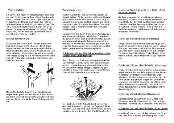wann schneiden gartenbaumschule timm. Black Bedroom Furniture Sets. Home Design Ideas