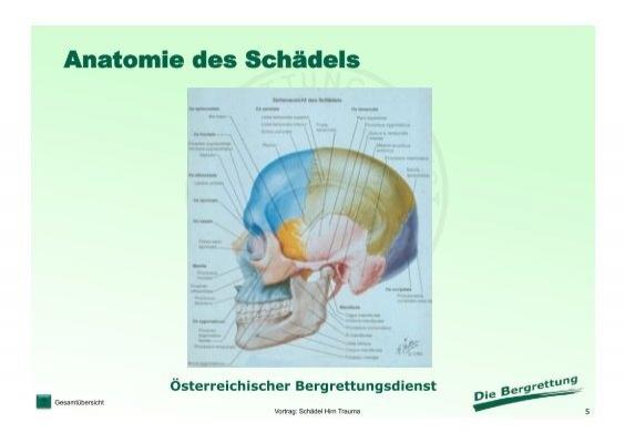 Anatomie des Schädels Ge