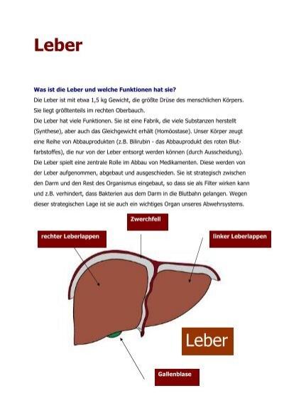 Erkrankungen der Leber