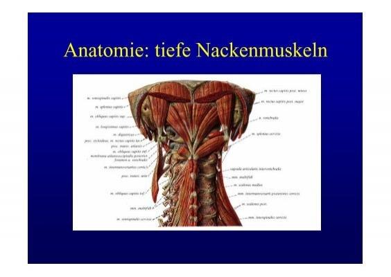 Herzkrankheiten - Akute und chronische Pathologien