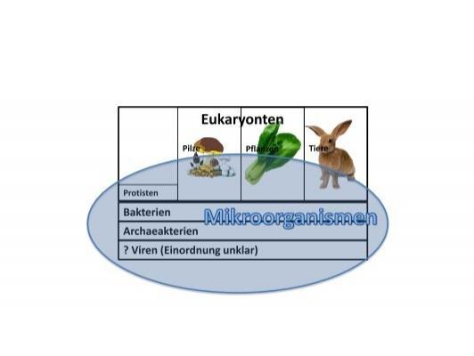 Eukaryonten - Dr. Selina Petrovic