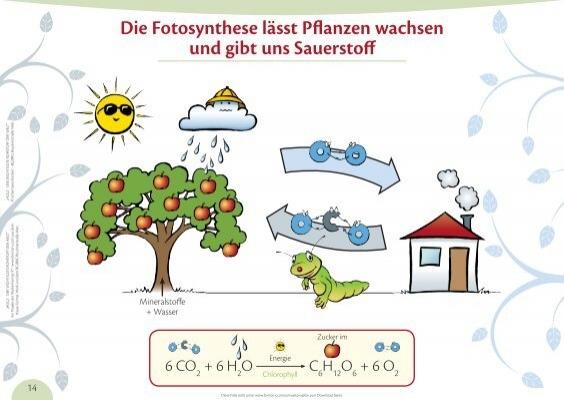 folie 13 die fotosynthese l sst pflanzen wachsen und format x. Black Bedroom Furniture Sets. Home Design Ideas