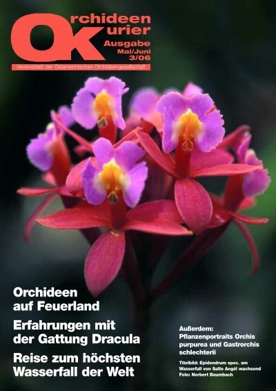 Der purpurne indische Orchideen-Baum eine wunderschöne Zimmerpflanze !