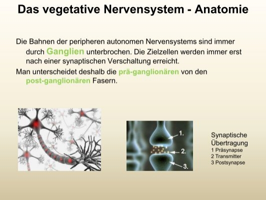 Vegetatives Nerve