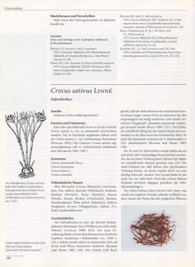 Crocus sativus Marktforme