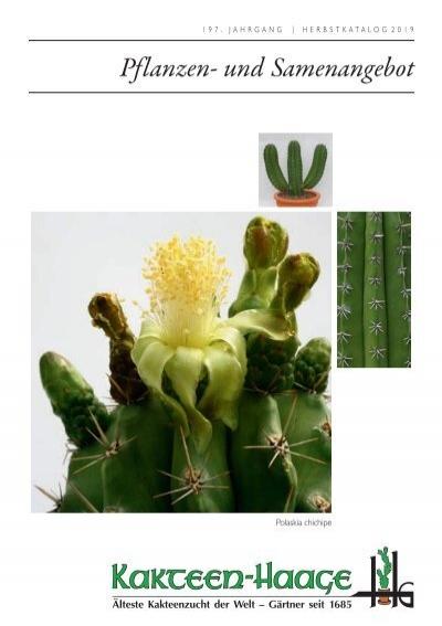 "Epiphyllum Blattkakteen Epicactus /""Etienne Anneessens/"" Jungpflanzen"