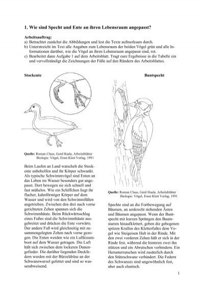 Arbeitsblätter Biologie Vögel Klett : Nestbau brutpflege un