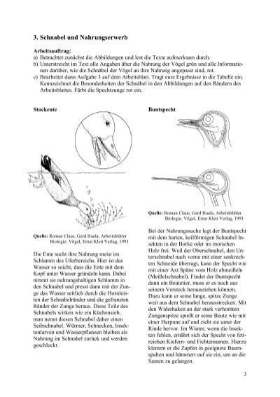 2. Nestbau, Brutpflege un