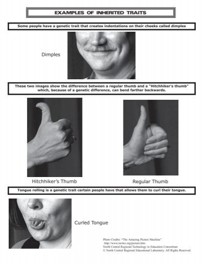 Examples Of Inherited Traits Hitchhikers Thumb Regular