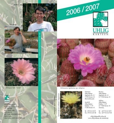 cactus rare Cactus Graines 20 graines Melocactus rubrispinus
