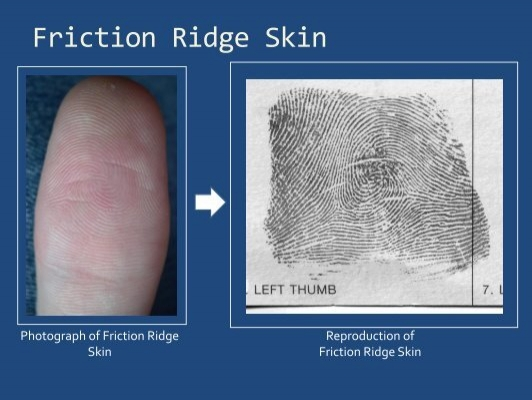what is friction ridge skin