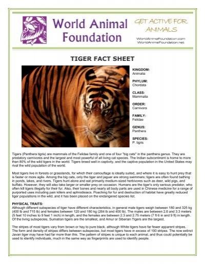 OWL FACT SHEET - World Animal Foundation