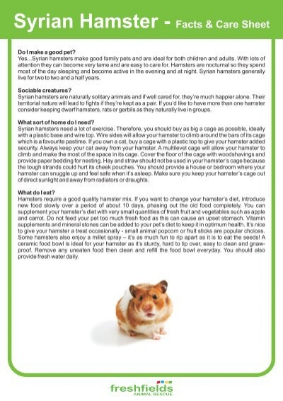 syrian hamster facts care sheet freshfields animal rescue