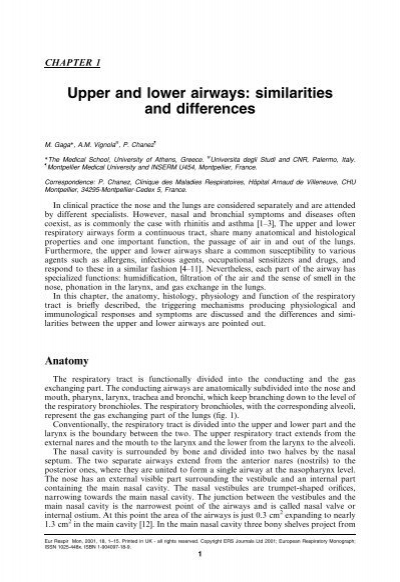 Upper And Lower Airways Similarities And Differences Ers Education