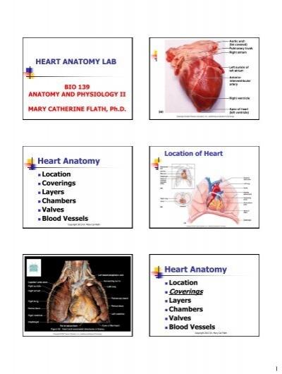 Heart Anatomy Lab Ppt Print