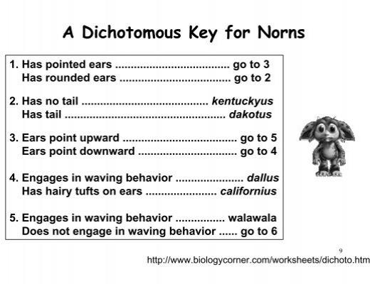 Dichotomous – Dichotomous Key Worksheets