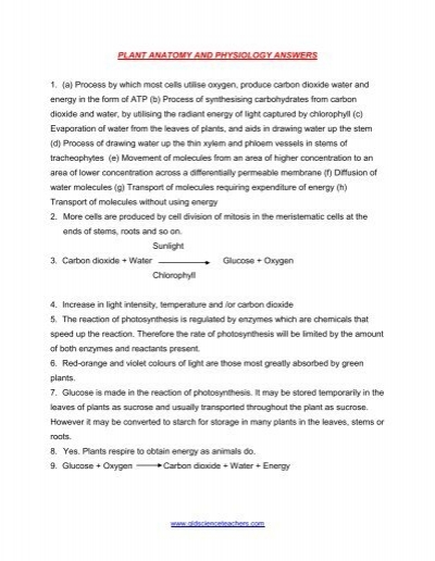 Plant Physiology Answers Worksheet - Biology is Fun