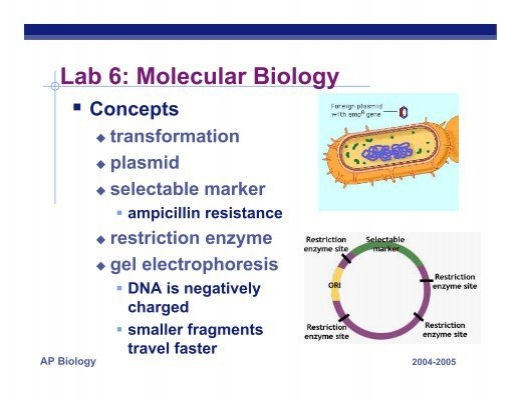 plasmid lab In your lab notebook, predict fragment sizes and draw map answer questions in pbr handout introduce supercoiled, linear, nicked circular conformation of uncut plasmid dna multimers in reca+ strains.