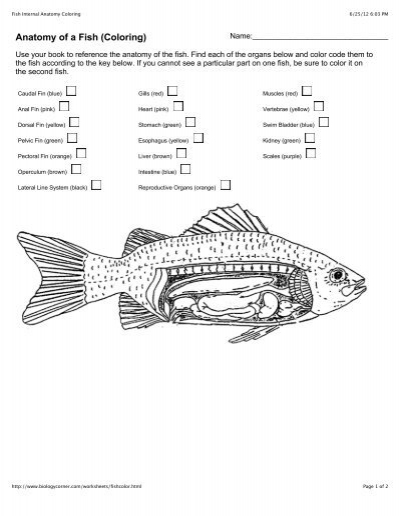 Fish External Anatomy Placoid Scales Bony Scales Bony Scales