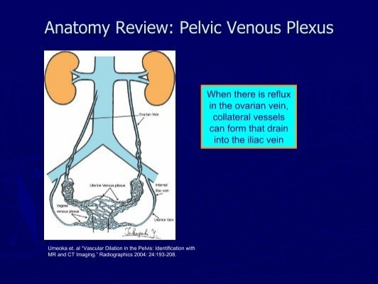 Ct anatomy review 4410816 - follow4more.info
