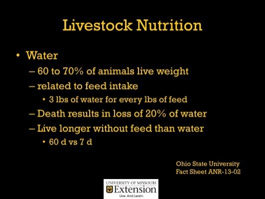 cattle hot weight loss