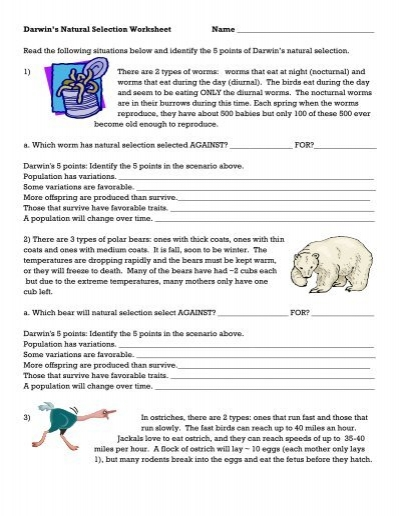 darwin 39 s natural selection worksheet. Black Bedroom Furniture Sets. Home Design Ideas