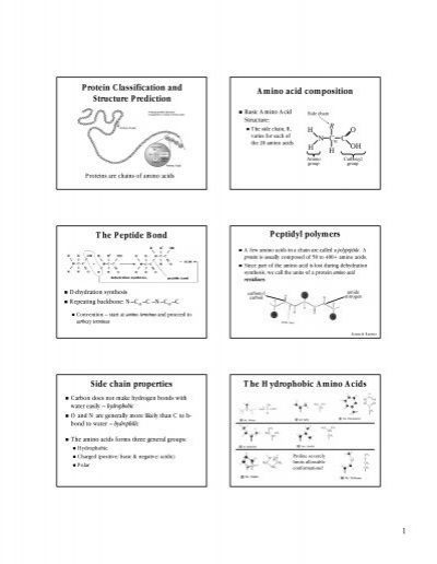 amino acids structures and classification pdf