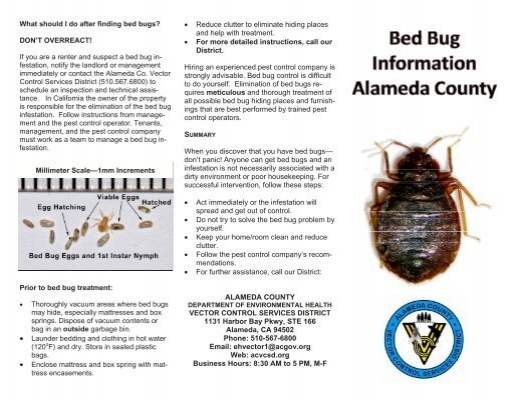 What Should I Do After Finding Bed Bugs Vector Control Services