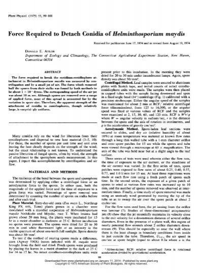 Helminthosporium spórák. Az őszi búza levélfoltosodást okozó betegségei